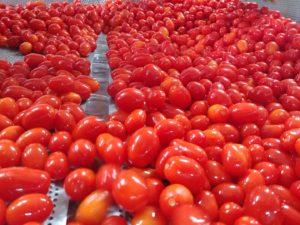 conserve artigianali: passato di pomodoro italiano - processo produttivo - produzione casareccia - frutto intero datterino