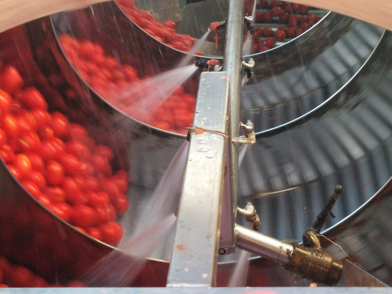 lavaggio a doccia Conserve di pomodoro