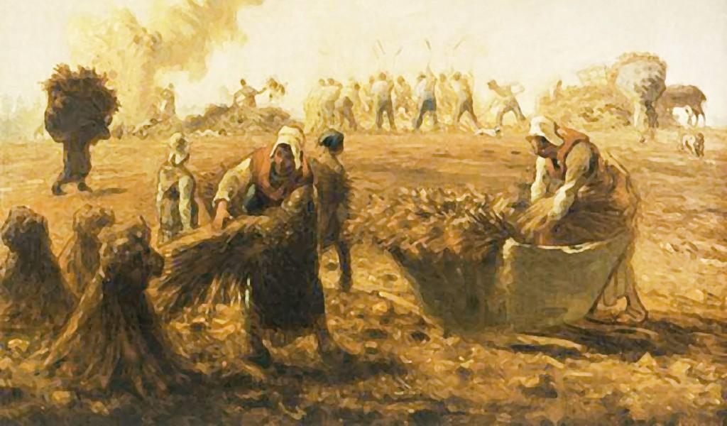 raccolta grano pasta artigianale